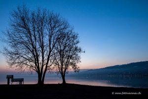 eine kleine Baumgruppe zur frühen Stunde am Bodensee