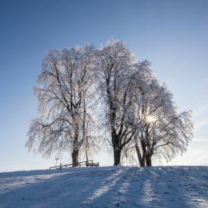 Bäume / Äste