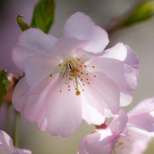 Blumenmotive / Pflanzen