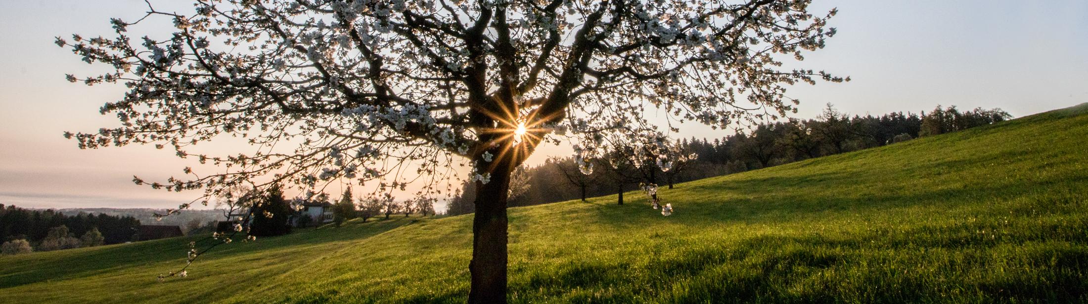 Fotomotiv-Frühlingsbaum mit Sonne