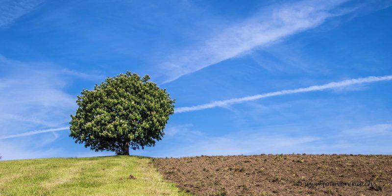 eine wunderschöne mächtige Linde oben auf einem Hügel
