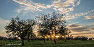 Fotokarte mit Sonnenuntergang zwischen den Obstbäumen