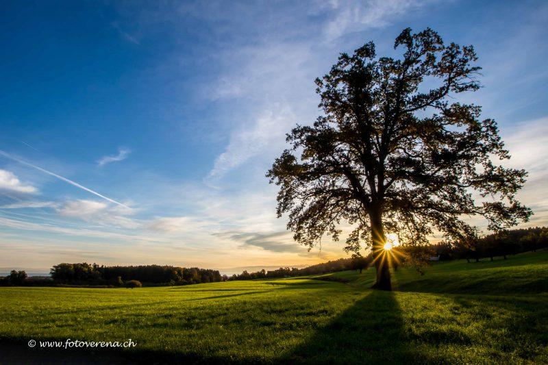 Fotomotivkarte mit zauberhaftem Herbstbaum frühmorgens