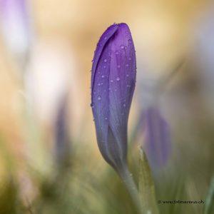 Frühling diverse