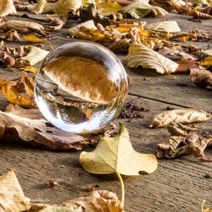 Herbstblätter auf einem Holzsteg dienen als Fotomotiv